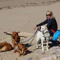 hi Pet Sitter Job, Hereford   Live in Dog Sitter and Walker