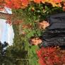 Au Pair in Versailles, Ile-de-France, France looking for a job: 2579873
