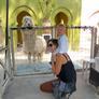 Nanny in Hua Hin, Prachuap Khiri Khan, Thailand looking for a job: 2748278