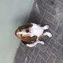 Pet Sitter in Flic en Flac, Black River, Mauritius 2749626