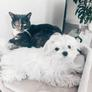 Pet Sitter in Monaco-Ville, , Monaco 2751041