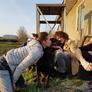 Pet Sitter in Chernivtsi, Chernivtsi, Ukraine looking for a job: 2801667