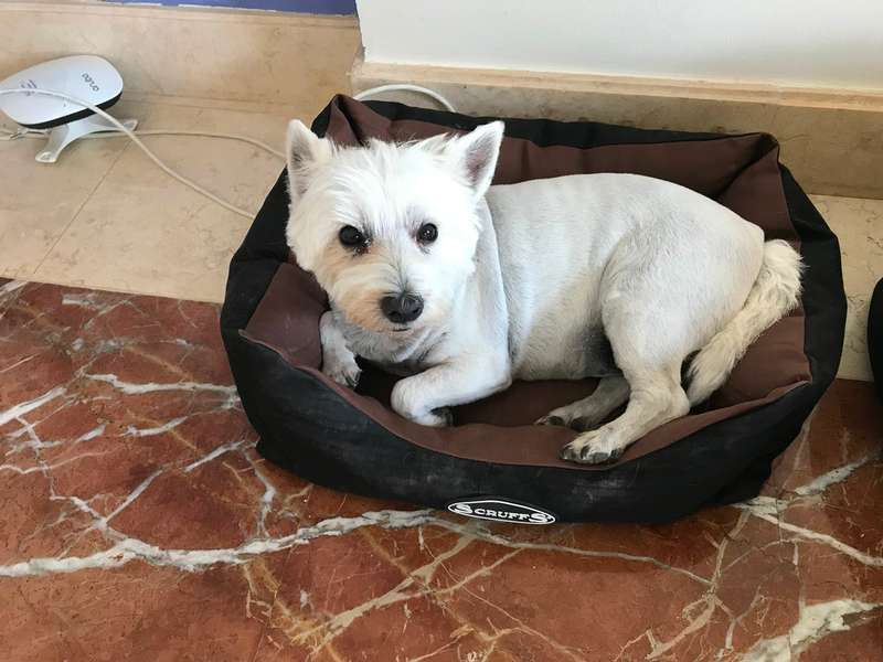 hi Pet Sitter Job, Dubai | Live in temporary pet sitter for