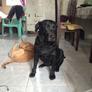 Pet Sitter in Dasmarinas, Cavite, Philippines 2809521
