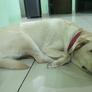 Tiersitter in Sohna, Haryana, Indien 2816714