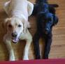Pet sitter a Sugar Land, TX, Stati Uniti in cerca di lavoro: 2849316