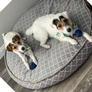 Cuidado de mascotas en North Las Vegas, NV, Estados Unidos 2861376