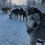 Tiersitter in Sallanches, Rhône-Alpes, Frankreich, sucht einen Job: 2862122