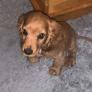 Cuidado de mascotas en Mosselbaai, Provincia Occidental del Cabo, Sudáfrica 2870245