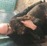 Pet Sitter in Lakatamia, Nicosia, Cyprus looking for a job: 2883825