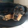 Pet Sitter in Manilva, Andalucia, Spain looking for a job: 2909711