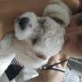 Pet Sitter in Arteaga, Santa Fe, Argentina looking for a job: 2927017