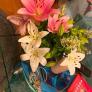 Femme de ménage à Affton, MO, États-Unis 2958841