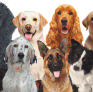 Pet Sitter in Cos Cob, CT, United States looking for a job: 2972848