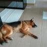 Pet Sitter in Tung Chung, , Hong Kong looking for a job: 2982579