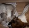 Pet Sitter in Imperia, Liguria, Italy looking for a job: 2985106