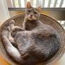 Pet Sitter em Setagaya, Tóquio, Japão 2987523