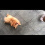 Pet Sitter in Singapore, , Singapore looking for a job: 3001589