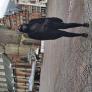 Au Pair a Spaarndam, Noord-Holland, Paesi Bassi in cerca di lavoro: 3029882