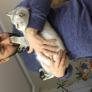 Pet Sitter em Skane-Tranas, Skane, Suécia à procura de emprego: 3046975