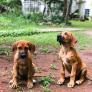 Pet sitter ad Harare, Mashonaland East, Zimbabwe 3060468