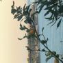 Hushållerska i Palermo, Sicilia, Italien söker ett jobb: 3060722