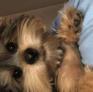 Pet sitter a Cape Town, Western Cape, Sudafrica in cerca di lavoro: 3089502