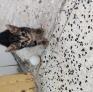 Pet Sitter în Attard, Malta, Malta caută un loc de muncă: 3094462