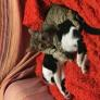 Pet Sitter in Limassol, Limassol, Cyprus looking for a job: 3099858